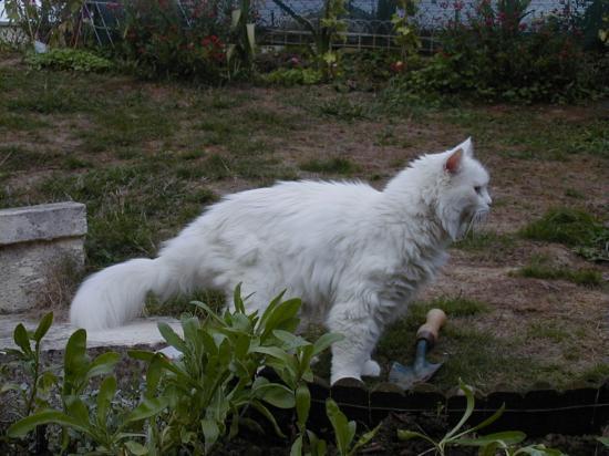 Dede on the garden